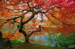 Awesome Tree