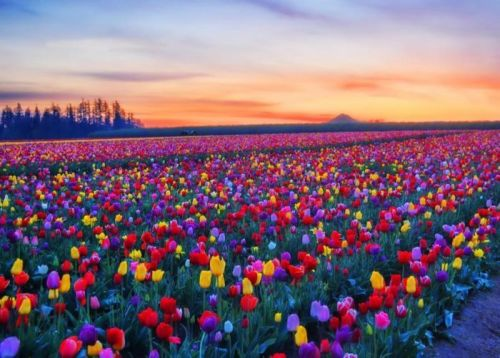 Color-field
