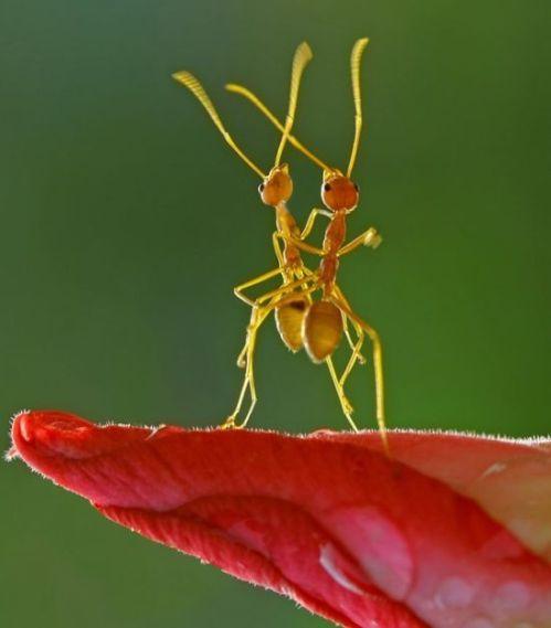 Dancing_ants