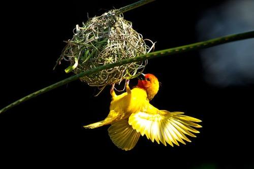 Bird-john-foreman